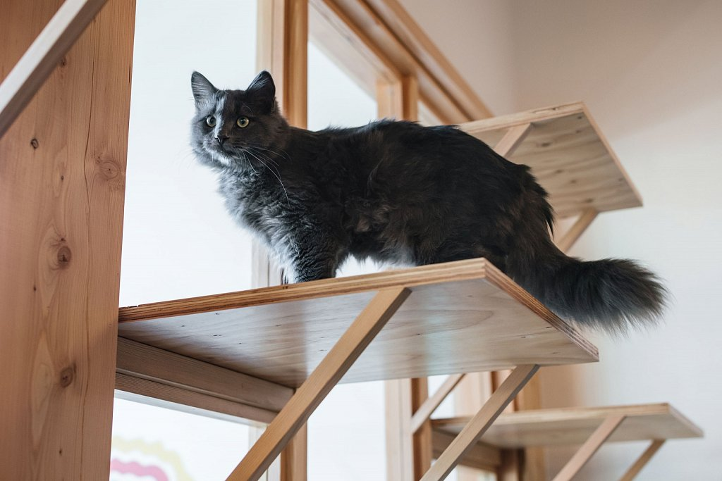 Purrington's Cat Lounge - VIII